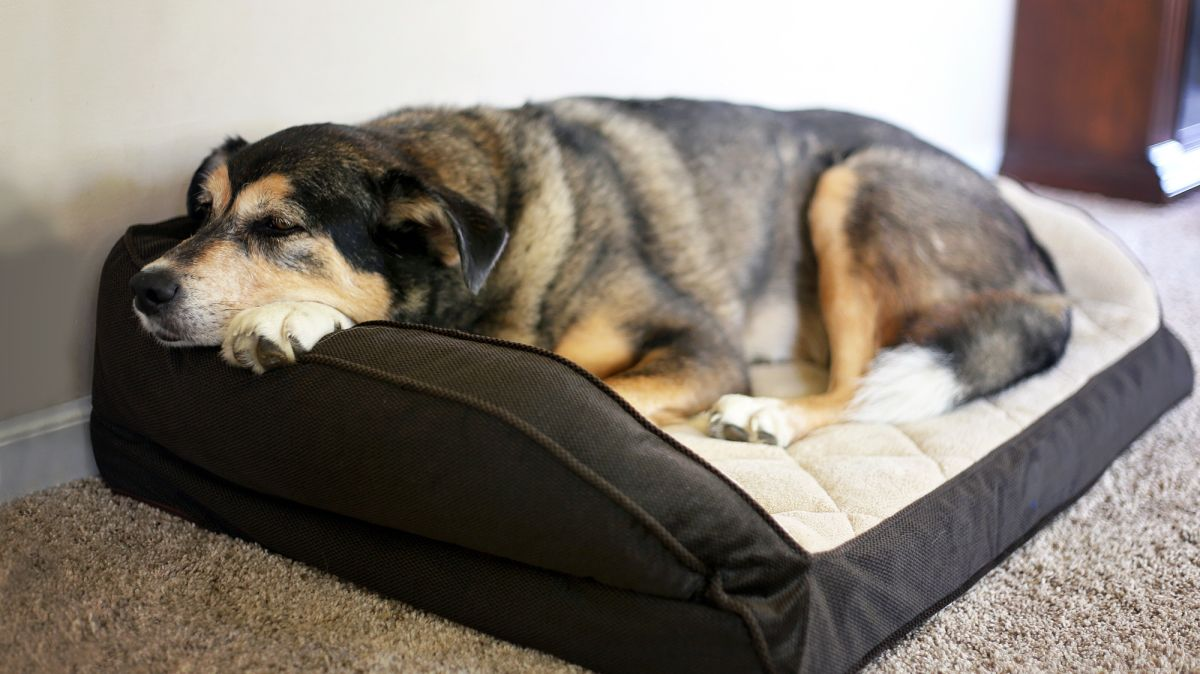 User Guide On Solid Memory Foam Dog Bed