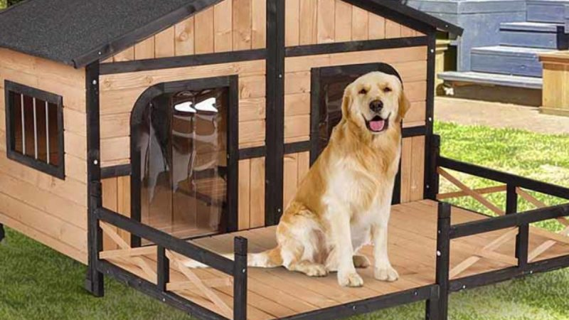 Detailed Study On The Dog Kennel